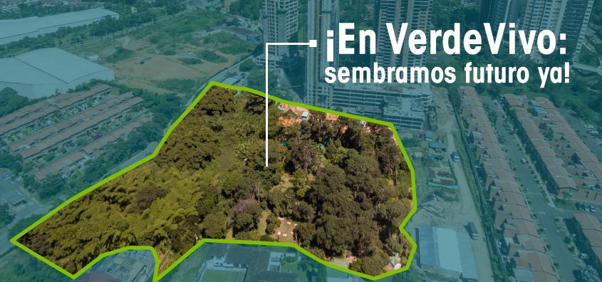 banner-infografia-verdevivo.png