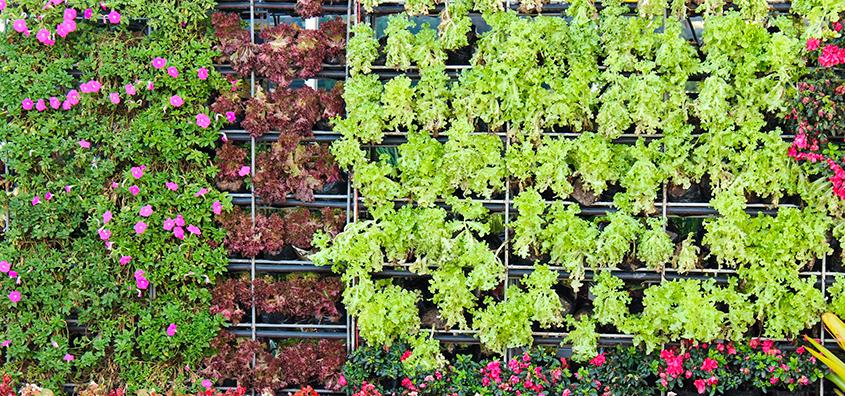 por qué tener un jardín vertical en casa