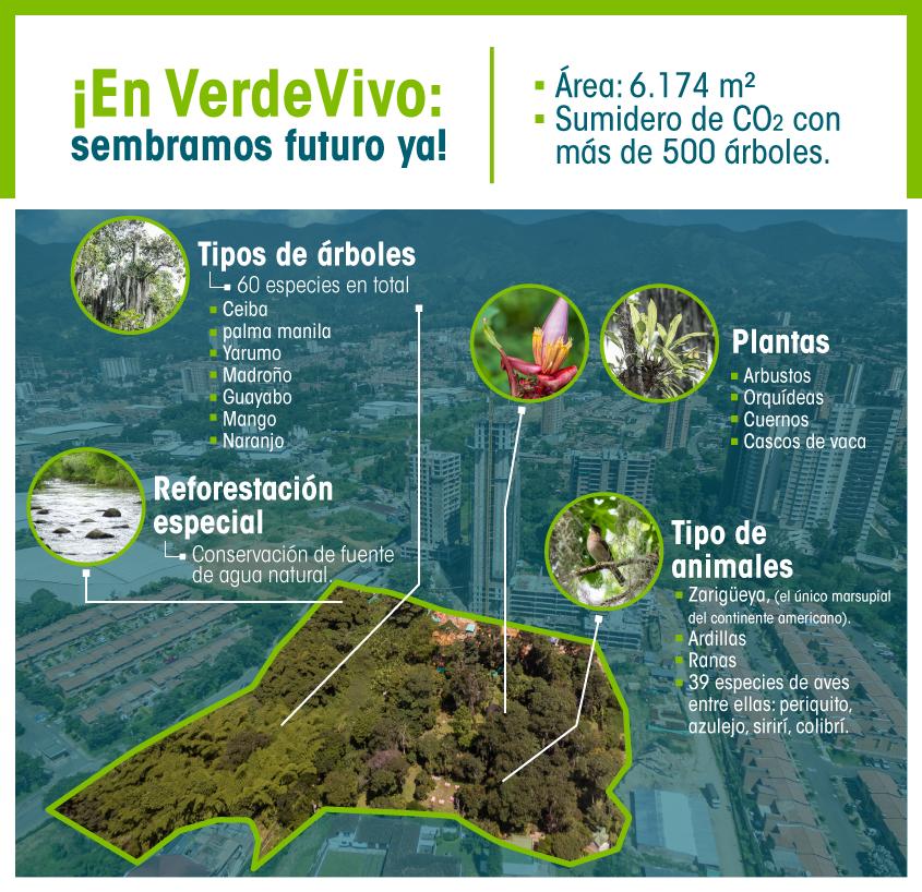 infografia-verde-vivo-2